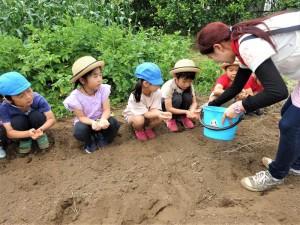 g長種蒔き (2)